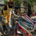 На велосипеде по Турции - всё о велосипедах в Аланье
